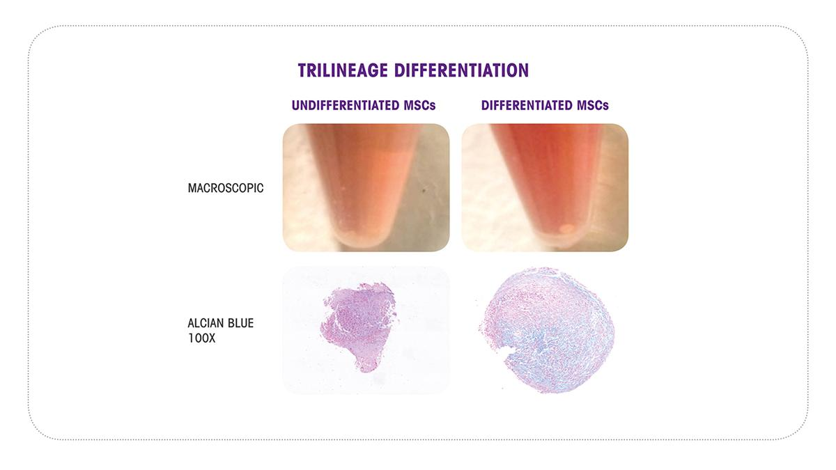 Cell differentiation assays